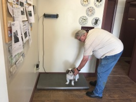 Each furry friend hops on the scale when arriving at Hometown.